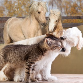 Formation massage chevaux, chiens et chats